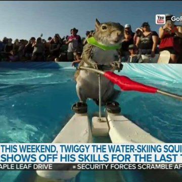 waterskiing squirrel